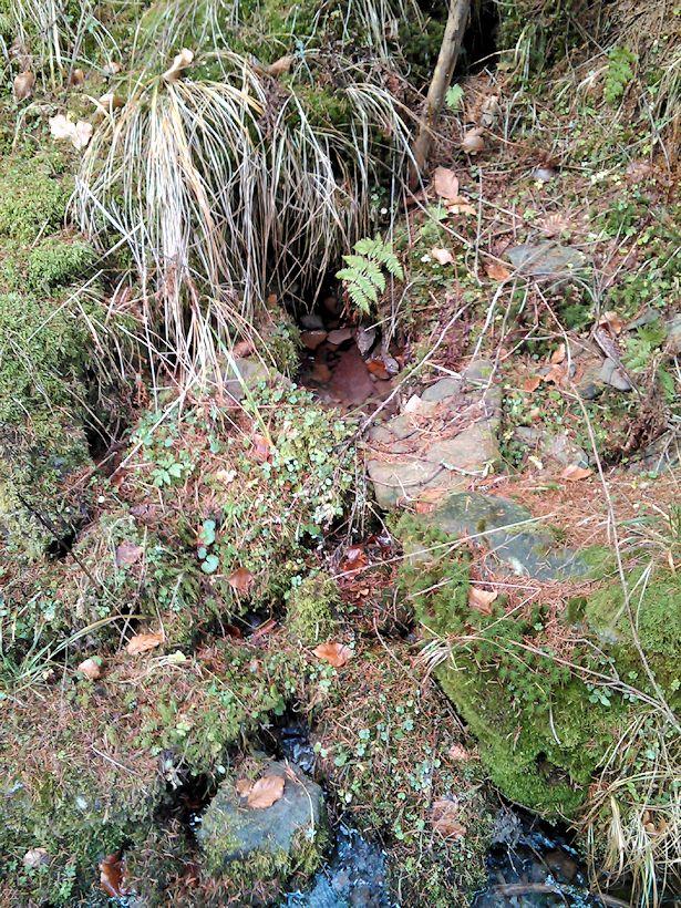 studánka Evkina vlčí voda a bludná hůl (10490)
