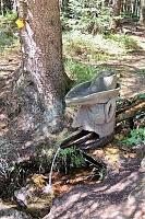 Foto záznam č. 10109 - V Janovickém lese