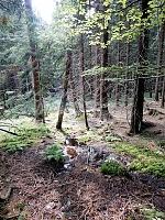 Foto záznam č. 10163 - Orličský potok