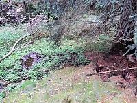 Foto záznam č. 10223 - Pod Černovodským sedlem