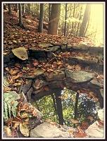 Foto záznam č. 10394 - Liduščiny studánky