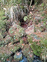 Foto záznam č. 10490 - Evkina vlčí voda a bludná hůl