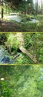 Foto záznam č. 9115 - Lesní jezírko