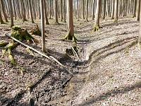 Foto záznam č. 9633 - V Státním lese
