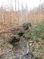 Foto záznam č. 9723 - V Loučském lese