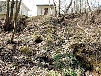 Foto záznam č. 10591 - Pacovka