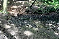 Foto záznam č. 10773 - Srnčí prameny