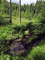 Foto záznam č. 10780 - Lesní