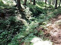 Foto záznam č. 10931 - Červenovodský potok