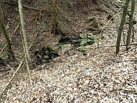 Foto záznam č. 11247 - Halounský potok