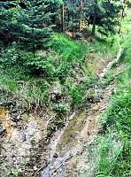 Foto záznam č. 11371 - Ve Vrchnostenském lese