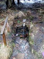 Foto záznam č. 11498 - V mechu a kapradí