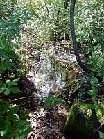 Foto záznam č. 11578 - Kamenný potok