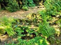 Foto záznam č. 11753 - V arboretu