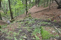 Foto záznam č. 11813 - Prameniště na Blatenském svahu