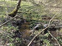 Foto záznam č. 12012 - Pramen Černého potoka