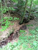 Foto záznam č. 12046 - V Jablonském lese 2