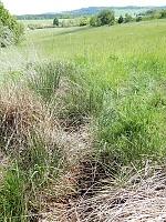 Foto záznam č. 12643 - Pramen Maratovského potoka
