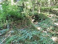 Foto záznam č. 12802 - Pramen Kosovského potoka