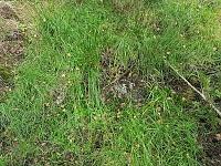 Foto záznam č. 12961 - Hamerský potok