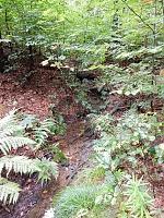 Foto záznam č. 12997 - Bysterský potok 2