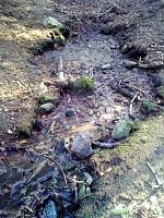 Foto záznam č. 13200 - Písečné prameniště