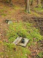 Foto záznam č. 13350 - Lesní studánka