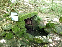 Foto záznam č. 13404 - Šenkýřka