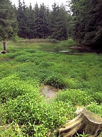 Foto záznam č. 13430 - Nad rybníčkem